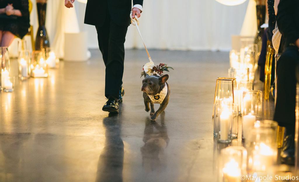 Elegant_Event_Lighting_Morgan_Manufacturing_Chicago_Wedding_Ring_Bearer_Dog